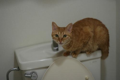トイレ 対策 で 尿 猫 以外